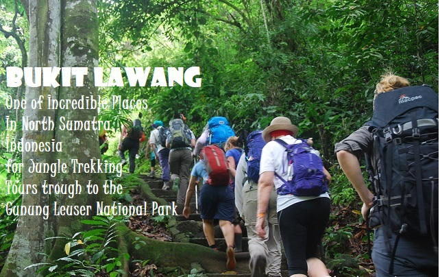 Bukit Lawang Jungle Trekking Tours