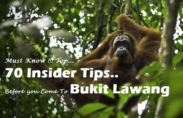 Top 70 Insider tips for Bukit Lawang