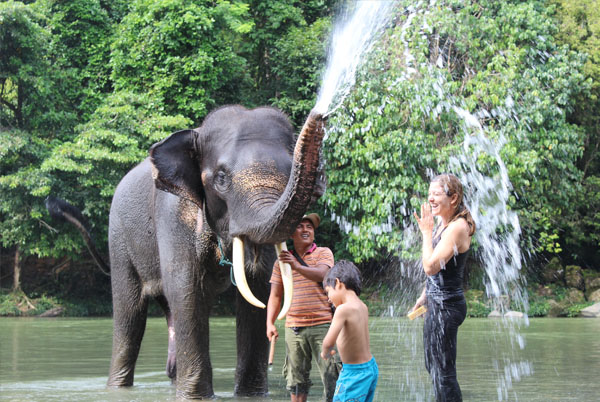 Orangutan + Elephants, 4 Days Tour